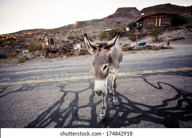 Donkey in the Mojave Desert, California, USA