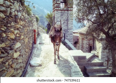 The donkey in the monastery of St. Anne on Athos
