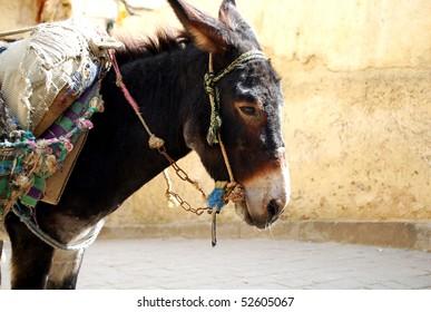Donkey in moroccan market