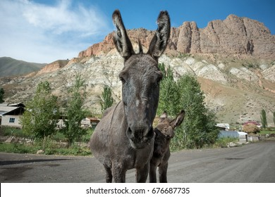 Donkey mother and baby standing in the middle of the street from up close with ears sticking up in a small village in the mountains of Kyrgyzstan