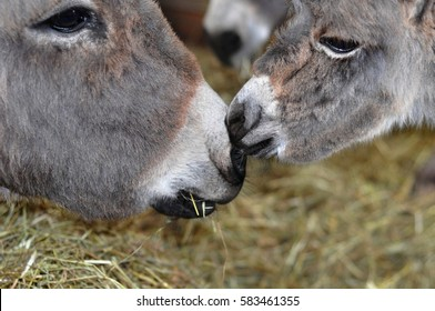 Donkey: mother and foal