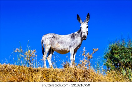 Donkey nature portrait. Donkey silhouette view. Cute donkey portrait. Donkey in nature