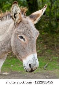 Donkey, New Forest National Park, Hampshire, England, UK.
