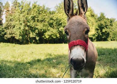 Donkey on the meadow