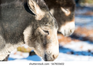 Donkey on a meadow with leafes and white snow