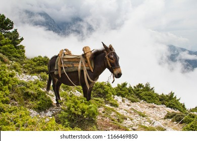 A donkey on the mountain by the Llogara pass in Vlora, with a background of clouds.
