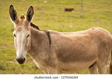 Donkey out in nature during the day time