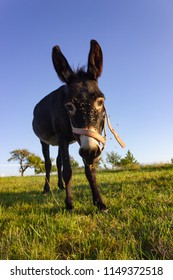 donkey at paddock on summer evening in south germany bavaria allgau countryside