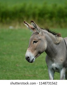 Donkey in pasture
