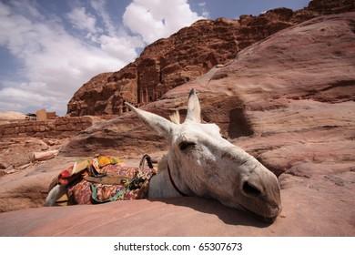 A donkey in Petra, Jordan