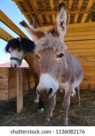 donkey and pony