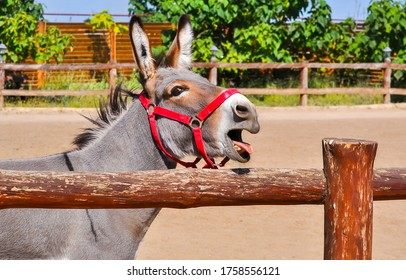 Donkey portrait at farm fence