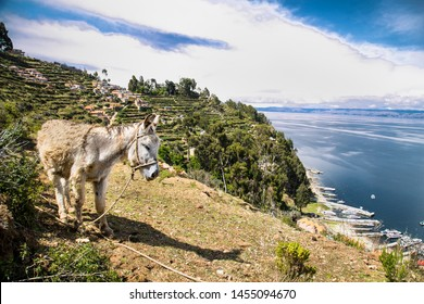 Donkey portrait at  Isla del Sol  on a sunny day in Bolivia.  South America