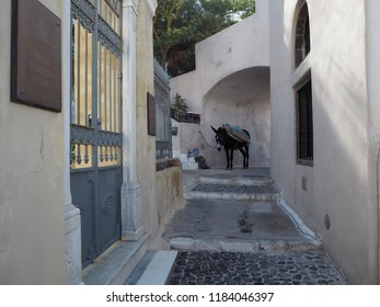 Donkey in Pyros, Santorini, in the shade