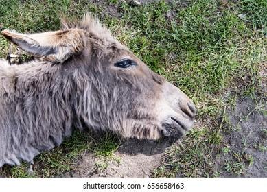 Donkey resting on the ground