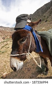 Donkey with scarf and a hat