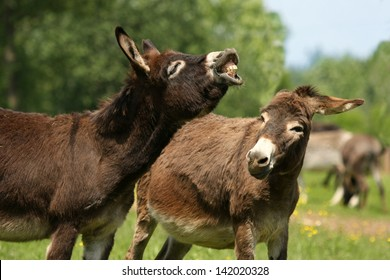 A donkey seems to smile while his friend looks at him with a perplexed look