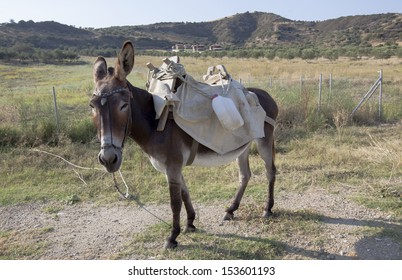 A donkey seen in a roadside in Greece