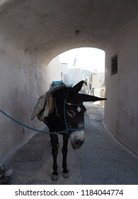 Donkey in the shade in Pyros town, Santorini