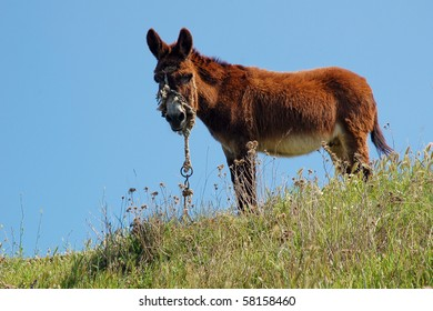 Donkey in small greece village