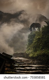 Donkey standing in the fog in Himalayan village, Nepal. Vertical image.