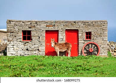 Donkey standing in front a barn in the countryside of Ireland