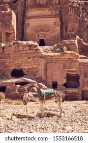 Donkey standing in front of ruins in ancient city of Petra, Jordan