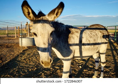 A donkey in the sunset time