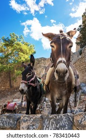 Donkey taxi - donkeys used to carry tourists to Acropolis of Lindos (Rhodes, Greece)