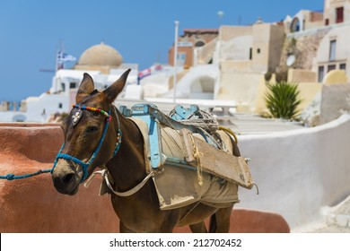 A Donkey Used For Carrying Tourists Up From The Harbour At Fira, Santorini, Greece