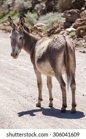 Donkey walking between rocks and grass