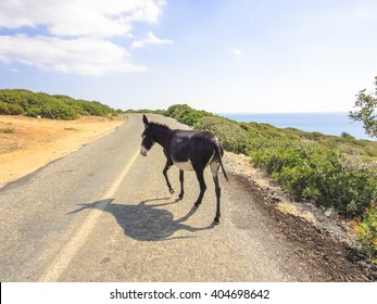 Donkey walks along the road in Cyprus. Karpasia. Very good donkey