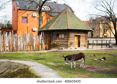 Donkey at zoo color standing on field grass