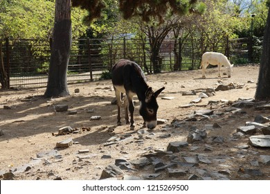 Donkey in zoological garden in Bojnice, Slovakia