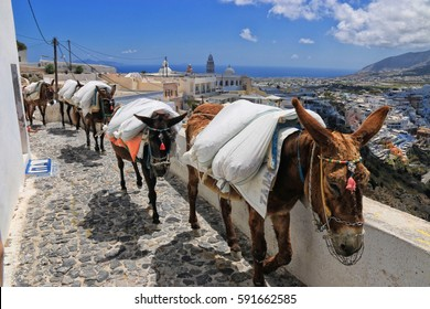 Donkeys carrying sacks in a village.