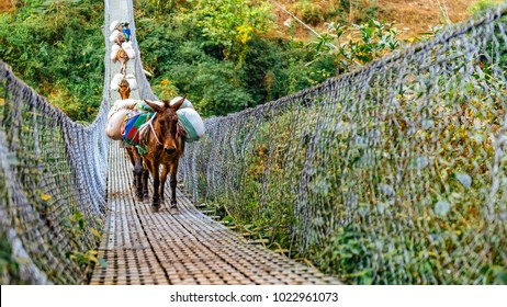 Donkeys crossing metal suspension bridge in Nepal, Himalayas, Manaslu circuit trek 2017