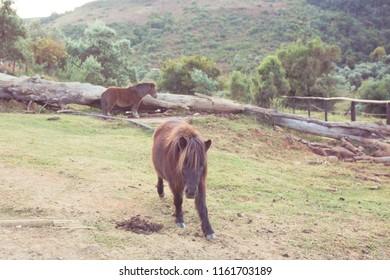 Donkeys in Drakensberg