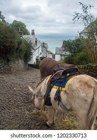 Donkeys eating hay on the historic cobbled streets of Clovelly in Devon , England