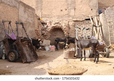 Donkeys hiding from the sun in the parkyard somewhere in the Marrakech Old Town