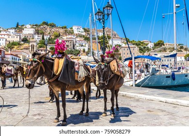 Donkeys at the Hydra island  in a summer day in Greece