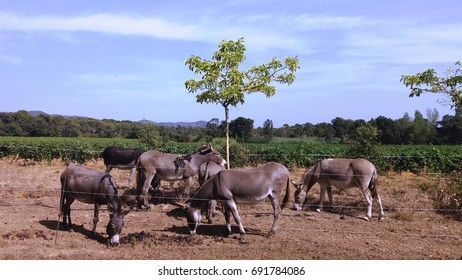 Donkeys in the meadow, around the tree