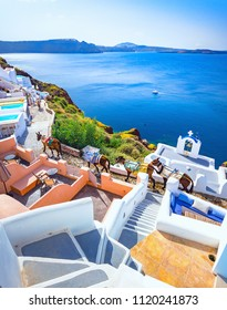 Donkeys at Oia town on Santorini island, Greece. Traditional and famous houses and churches with blue domes over the Caldera, Aegean sea