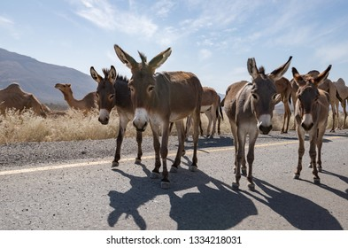 Donkeys on the road, Ethiopia