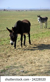 Donkeys are part of the animal population on this California farm