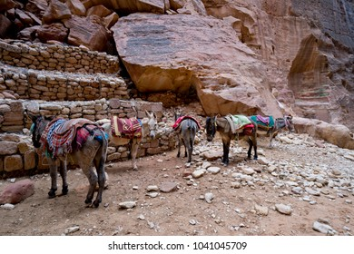 donkeys in petra, jordan