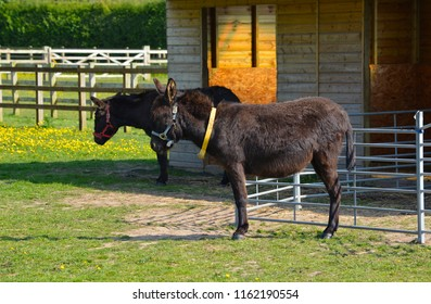 Donkeys Relaxing at the Stables