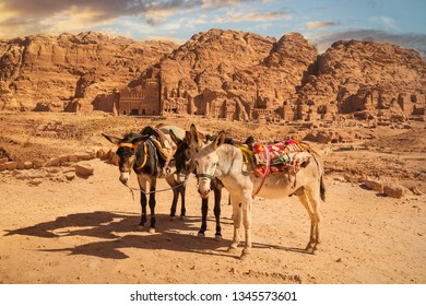 Donkeys for tourist transport in front of Royal Tombs, Petra, Jordan