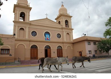 donkeys in town in Cafayate, Argentina