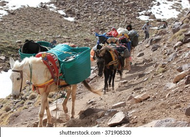 Donkeys transport luggage, Imlil, Toubkal national park, Morocco