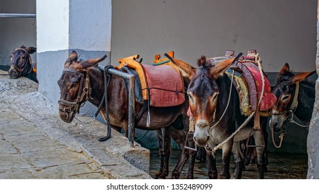Donkeys for transporting people at the top point of the Acropolis of Lindos. Rhodes Island, Greece.